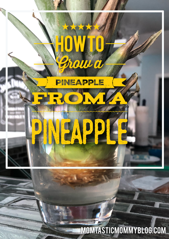 grow-a-pineapple-front