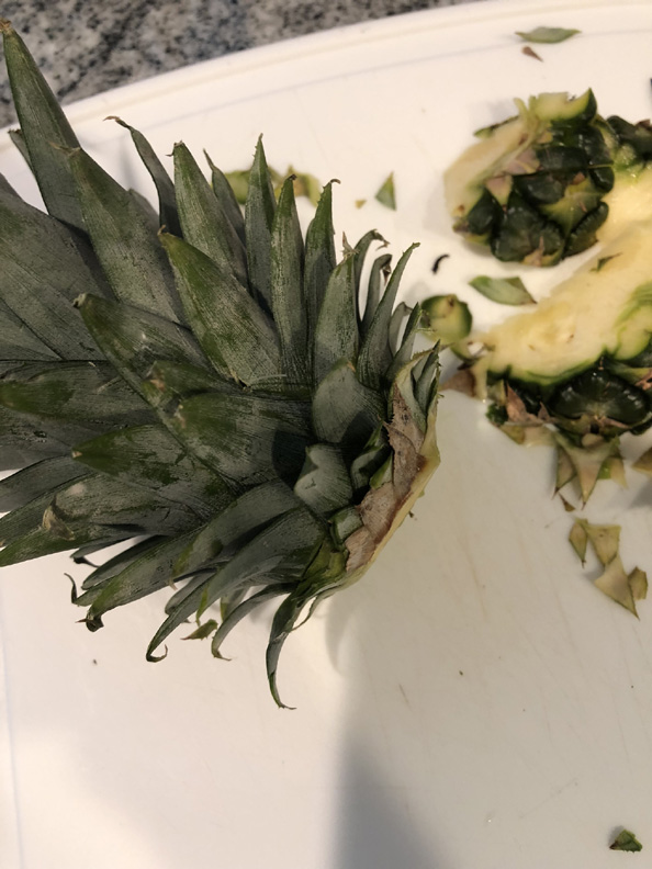 grow-pineapple (3)