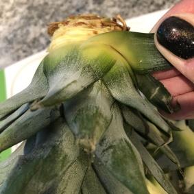 grow-pineapple (4)